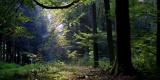Wald_Natur_Holz_Baum_Erde_Umwelt