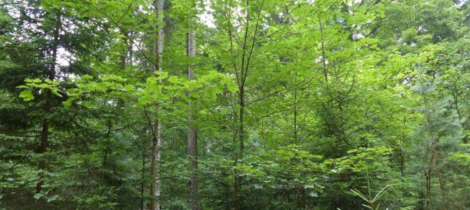 Waldgang 2020 entfällt wegen Corona-Krise